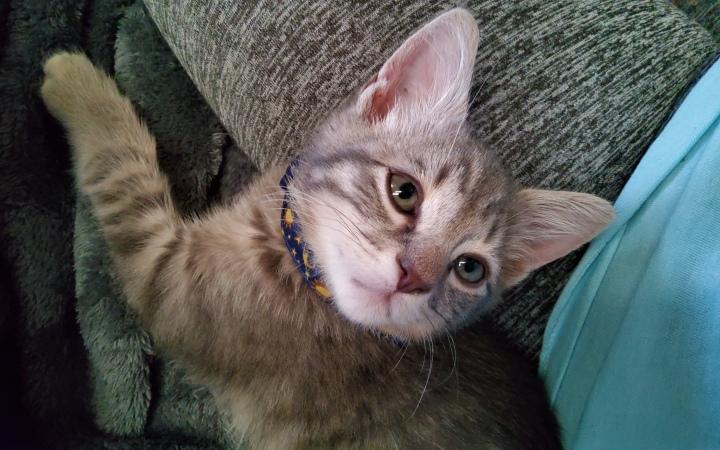 Meet Apollo!